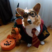 halloween-dog-costume-ideas_1 | FallinPets