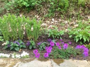 verbena with star flowers, heliotrope, purple cone flowers