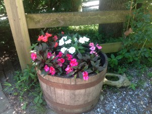 Kayla's impatiens with pig