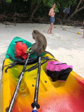 Monkey Beach , Phi Phi  Don , Thailandia