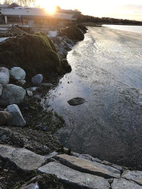 Alfrida rensning hamnen