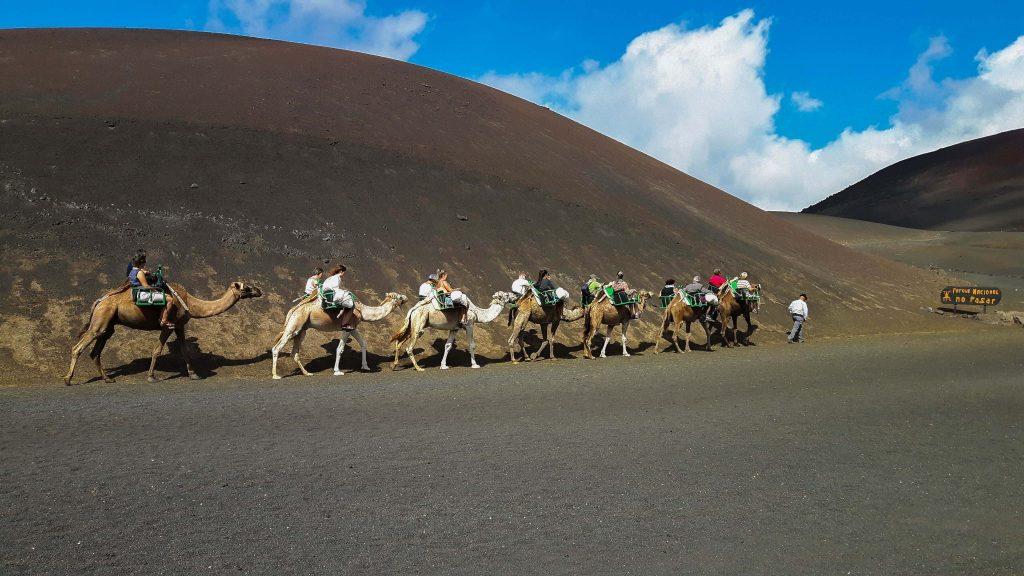Lanzarote-travel-guide-timanfaya-nationalpark-kamele-reiten-dromedar-karawane (1 von 1) (1)