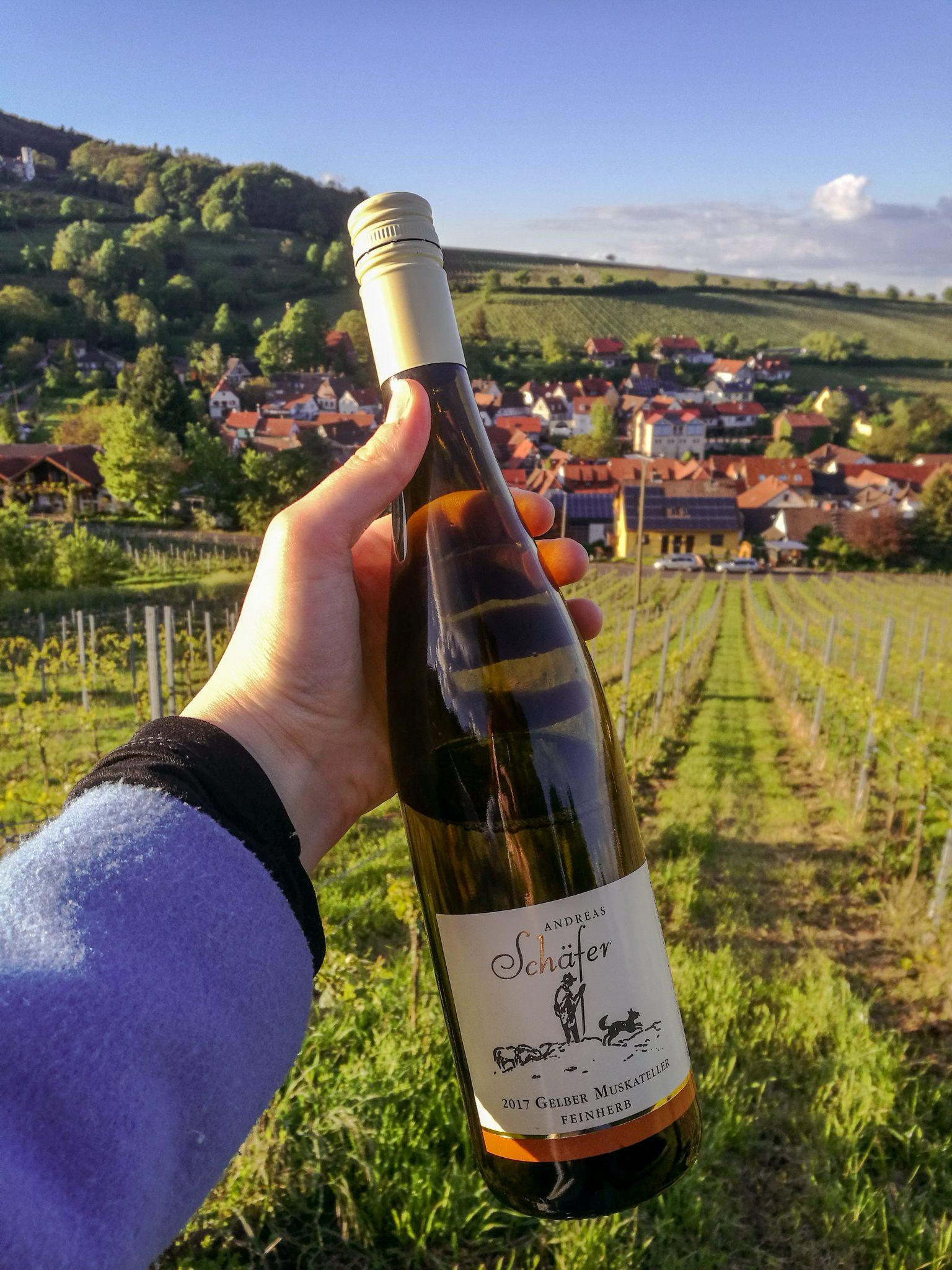 Landau-pfalz-leinsweiler-weinberge-wein