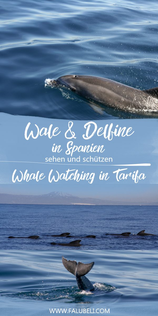 wale-delfine-spanien-sehen-schützen-whale-watching-tarifa-grafik