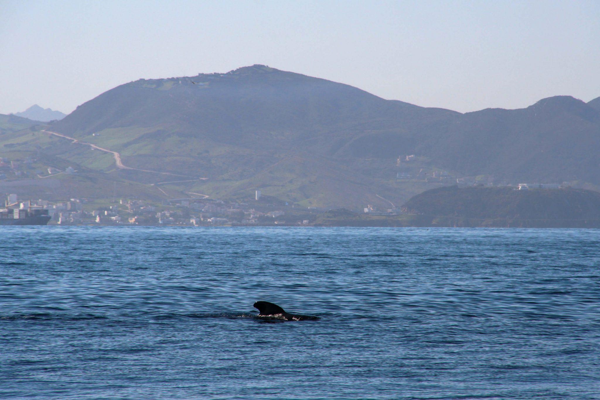 ale-delfine-spanien-whale-watching-tarifa-firmm 10