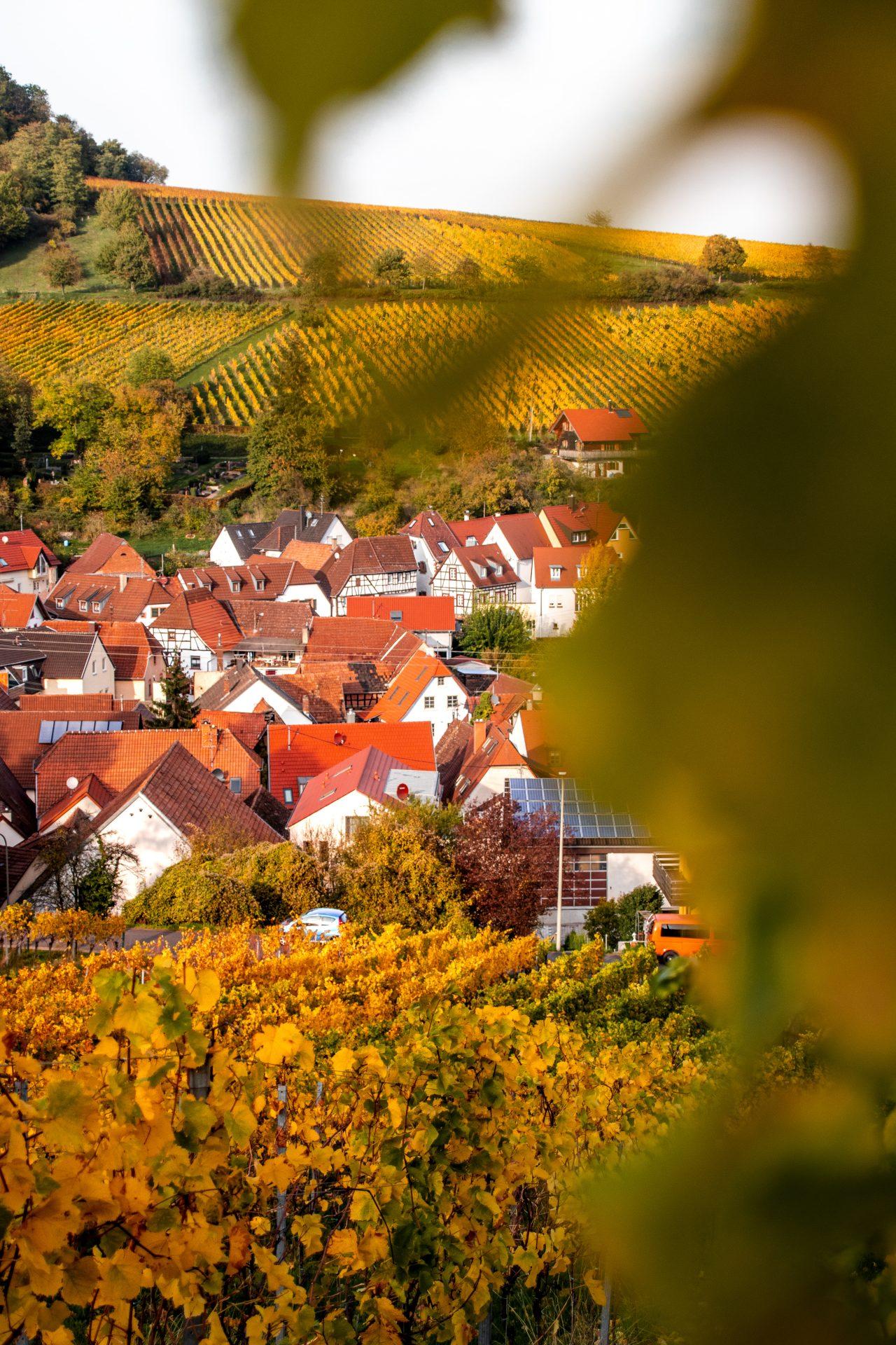 pfalz-herbst-leinsweiler.