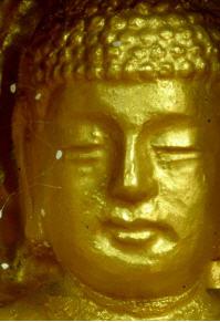 佛像上的优昙婆罗花