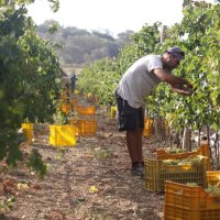 Fra Brettel Estate Celebrating a decade of harvesting