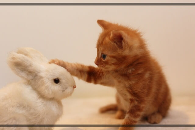 子猫とウサギのぬいぐるみ