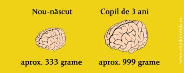 dezvoltarea-creierului