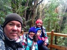 Bosque de Arrayanes