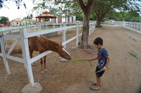 Os cavalos também devem ter adorado