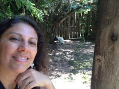 Canguru albino