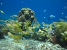 Espécies marítimas em Cozumel
