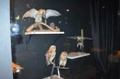 Museu de fauna da Caatinga