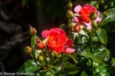 Homeoffice im Garten