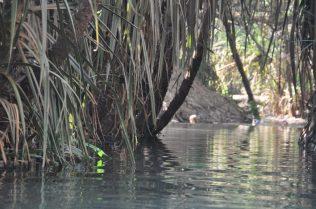 (C) Jule Reiselust: Thermalquellen bei Katherine, hier kann man bei lauen 32°C baden.