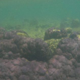 (C) Jule Reiselust: Lila Korallenfelder in Coral Bay.