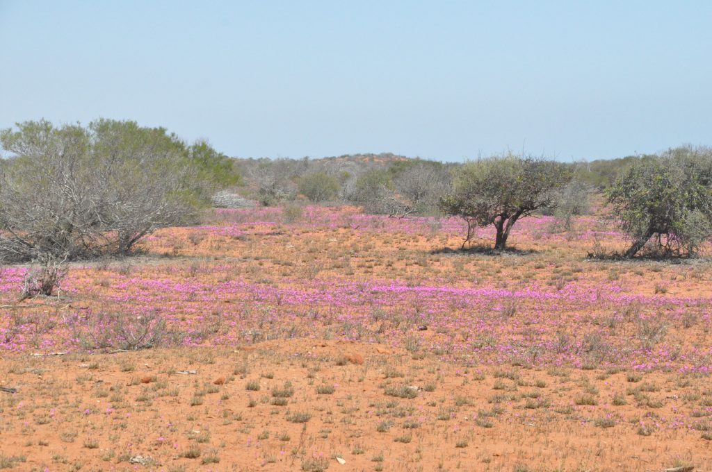 Coral Bay - Abschied vom Ningaloo Reef