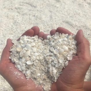 (C) Jule Reiselust: In dem sehr salzhaltigen Wasser der Shark Bay wachsen die Herzmusxheln sehr schnell. Sie werden nicht besonders groß, sind aber sehr zahlreich anzutreffen.