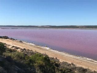 (C) Jule Reiselust: Der Pink Lake (Hutt Lagoon) erhält seine Färbung durch die Dunaliella salina Alge.