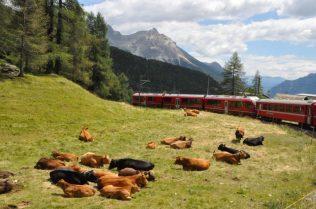 (C) Jule Reiselust: Unser Zug kurvt bergab durch die Bergwiesen nach Italien.