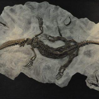 (C) Jule Reiselust: Fossilienfund vom Monte Giorgio.