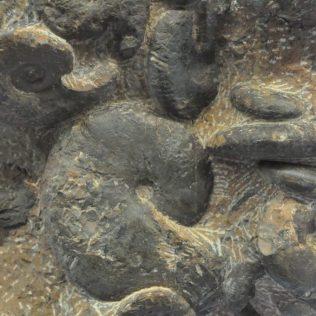 (C) Jule Reiselust: Fossilienfund am Monte San Giorgio.