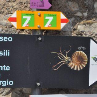 (C) Jule Reiselust: Ganz versteckt liegt das unglaubliche Fossilienmuseum in Meride.