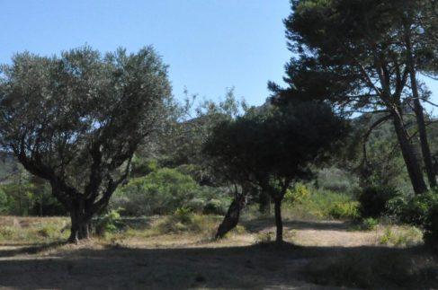 (C) Jule Reiselust: Heutiger Blick auf die Gemäldevorlage für The Olive Trees von van Gogh.