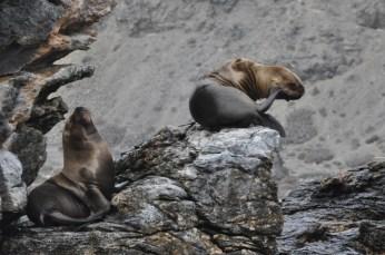 Im Humboldt-Nationalpark