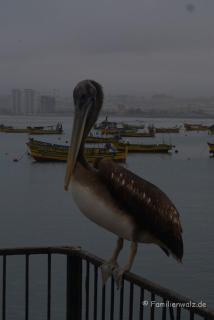 Am Hafen von Coquimbo