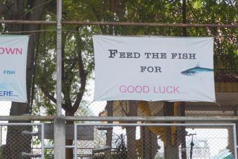 Fische füttern bringt Glück