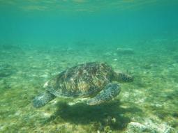 Unterwasserwelt vor Apo Island
