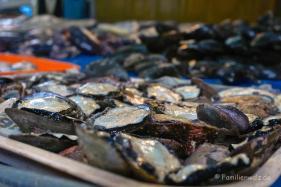 Dem Herzen folgen, Coquimbo streifen und in Pisco Elqui für immer bleiben wollen - Austern in Coquimbo