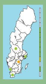 A-grenen: Ahlfort på Liljeholmen