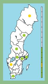 D3d-grenen: Ahlfort i Jokkmokk