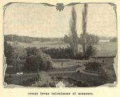 Trädgården på Schedevi.