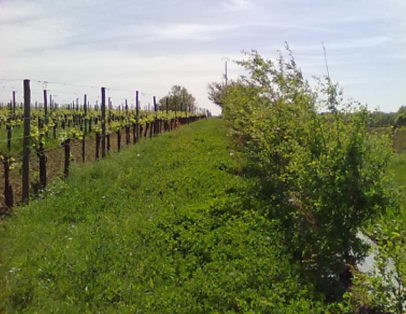 Vignes famille naud projets écologiques