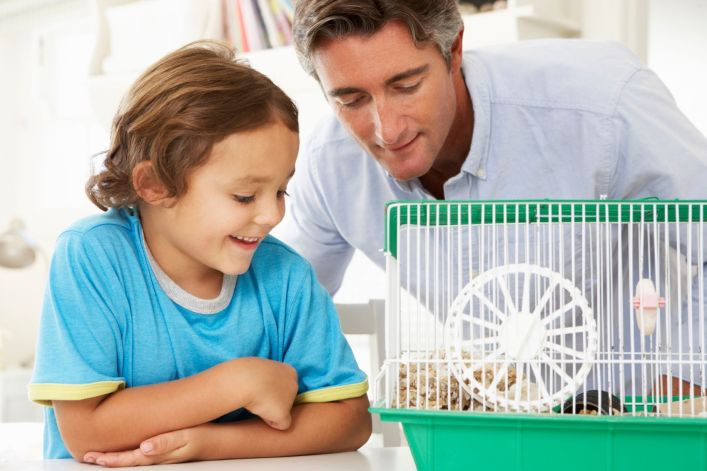 adopting a hamster for your family