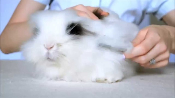 how to brush properly an angora rabbit