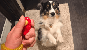 how do dog clicker training work ?