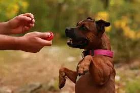 how do dog clicker training work ?