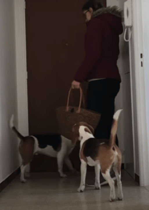 train your dog to stay alone home for 8 hours