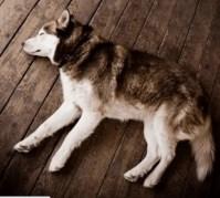 dog position sleeping