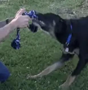 training a dog to play fetch
