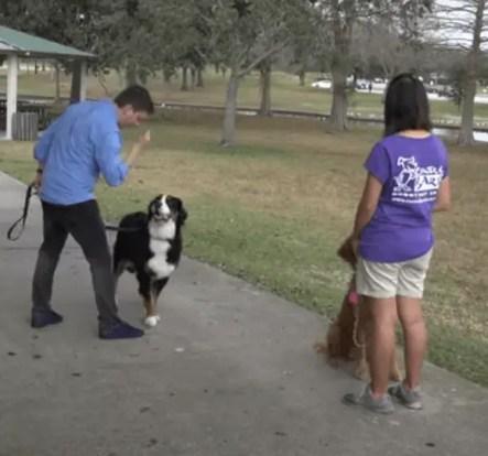 leash walking dog training step by step
