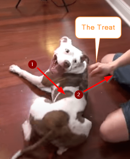 teach a dog to roll over using the lure training