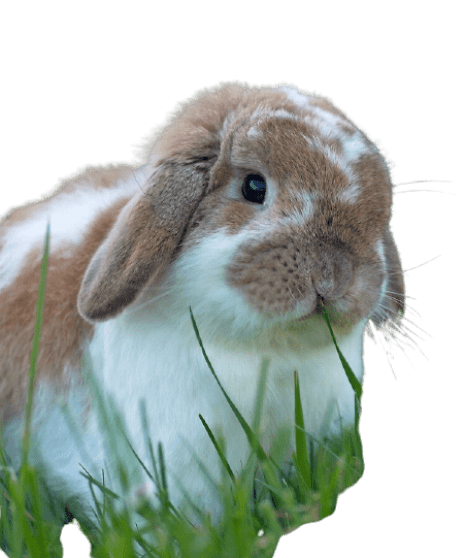 The Best Rabbit Breed to start with