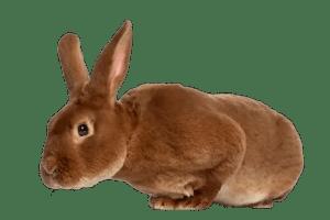 Rex Rabbit famillypet 1